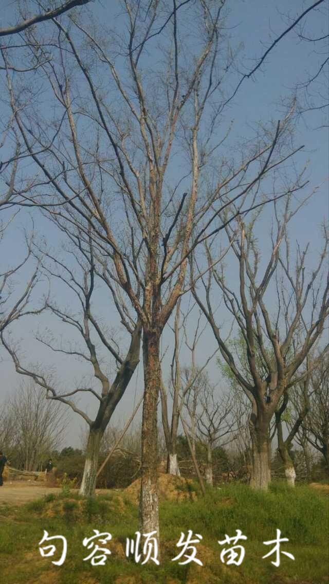 榔榆木树坚硬,可供工业用材;茎皮纤维强韧