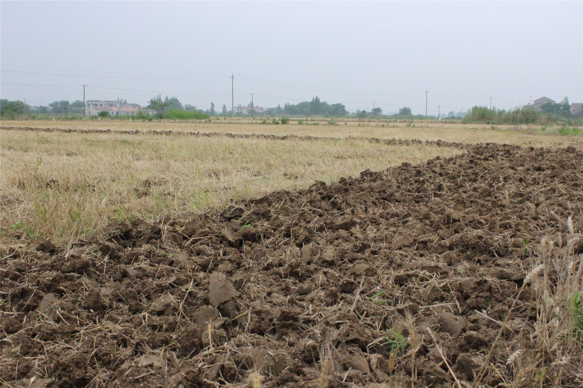 p图素材农田干旱