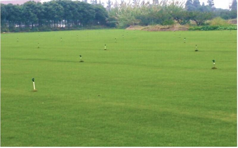 草坪绿地是人工异地创建的植物群落。生态学研究表明,群落的稳定性与其组成成分的遗传多样性之 间有着高度的相关性。因此,实际应用中草坪群落组分的构建常采用多(品)种组合配伍的方法,以增强 草坪在逆境胁迫下的耐受力。草地早熟禾与多年生草坪型黑麦草组合正是冷季型草坪草种建植组合中 常用的草种搭配方案之一。这种组合的优点不仅表现在草坪群落色泽靓丽、坪面整齐均匀,而且高度互 补的生长习性使群落具备了显著的多用途特性。尤其是伴随着拥有耐超低修剪特性的新型草地早熟禾品 种,如新哥来德、奖品、蓝宝、解放者、