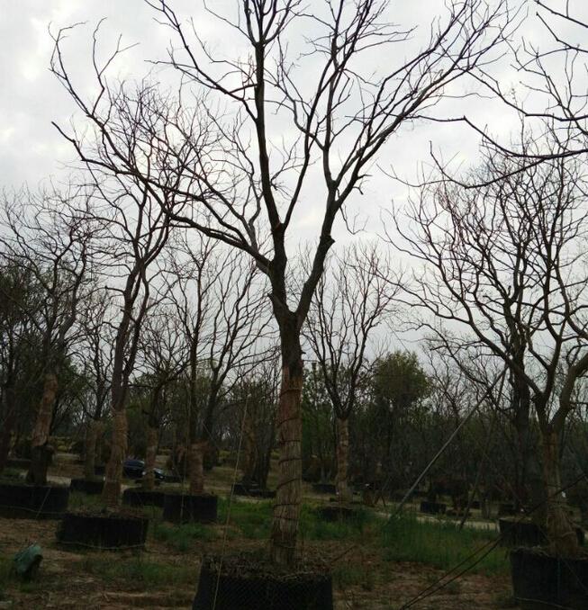 黑白树落叶手绘
