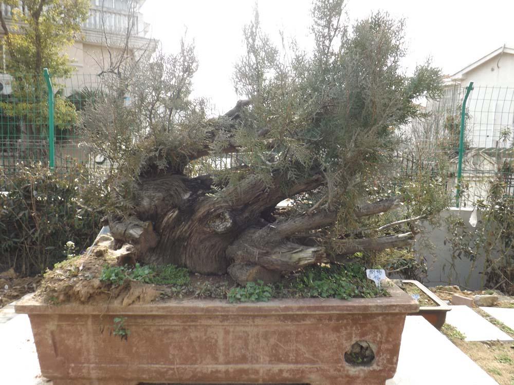 盆景木制底坐图片
