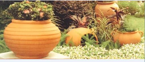 有的花盆呢,是家里用过的油桶
