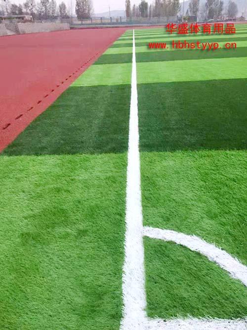 足球场草坪