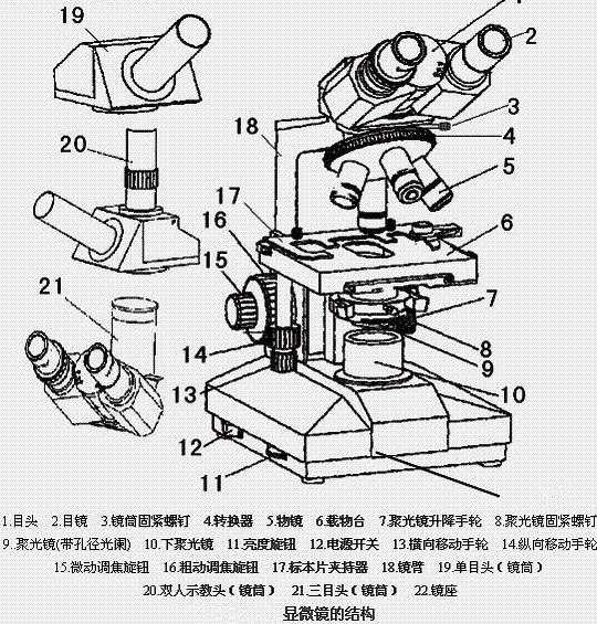 光学显微镜的使用方法及其构造原理详解