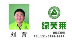 高级工程师-刘营