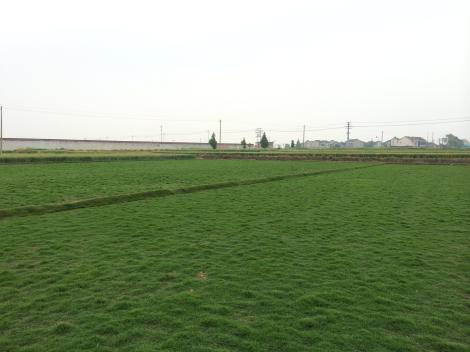 中阳草坪基地