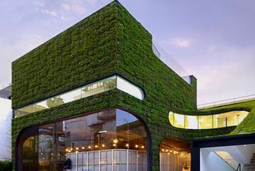 建筑植物水彩画