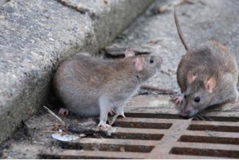 杀虫灭鼠厂家