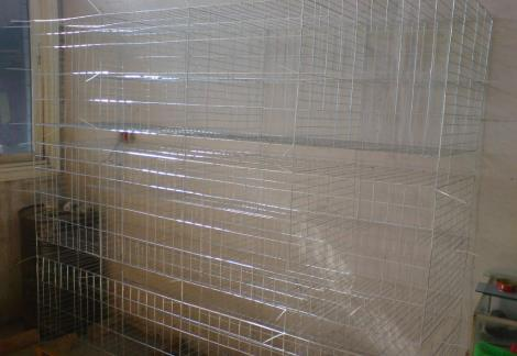 鸽子笼价格 鸽子养殖设备 肉鸽笼 笼.图片