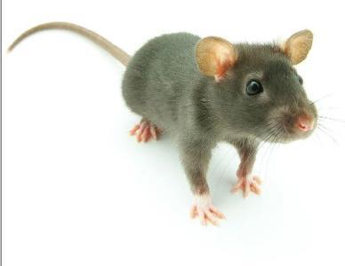 扬州杀虫灭鼠