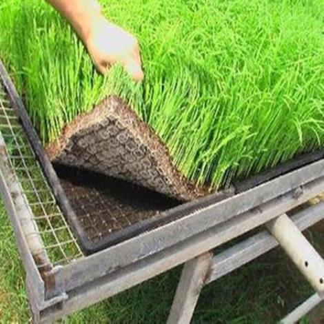 节能环保营养绿化毯