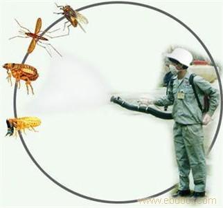 江都白蟻消殺
