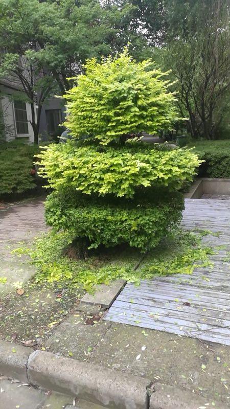 花园绿化养护