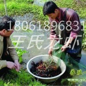 青海龍蝦苗養殖基地