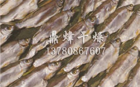 海鲜烘干箱供货商