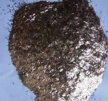 硅藻泥金葱粉