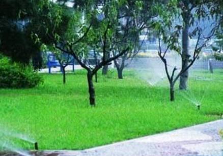 绿化养护管理