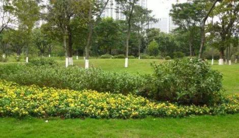 园林绿植养护