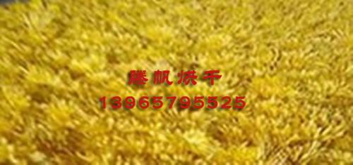 菊花烘干房生产厂家