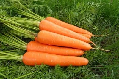 胡萝卜供货商