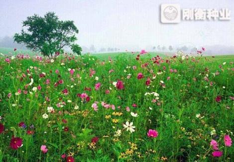 矮生野花组合