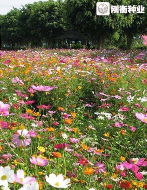 北方野花组合