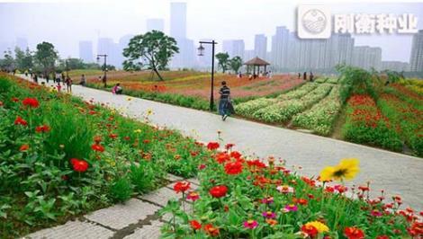 城市景观野花组合