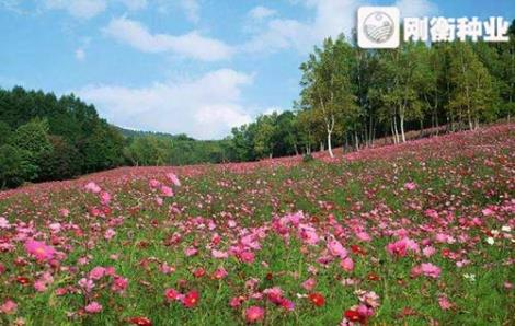 南方野花组合