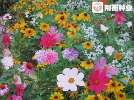 花卉种子批发