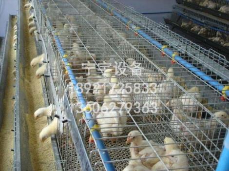 鸡笼生产厂家