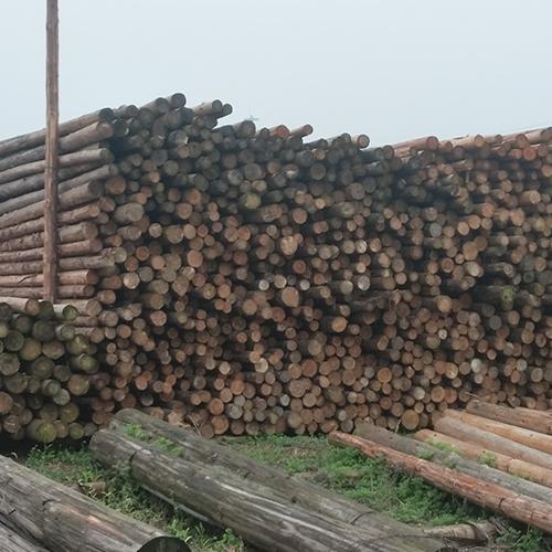 方木批发厂家