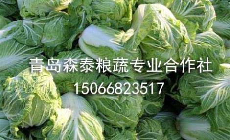 秋白菜供货商