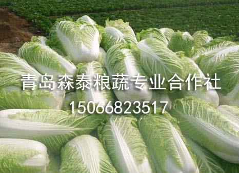 春白菜价格