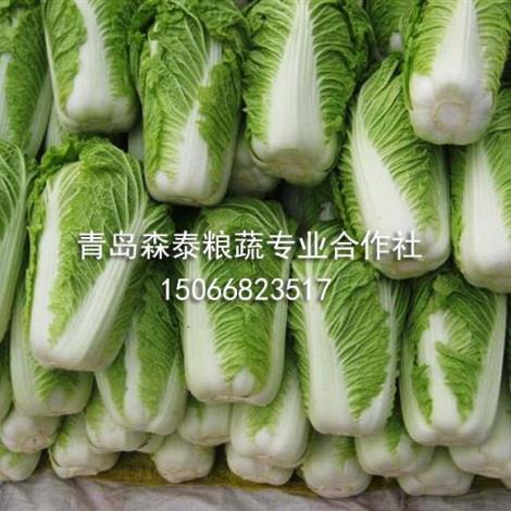 春白菜供货商
