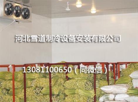蔬菜保鲜冷库建造