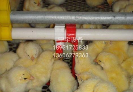养鸡料线生产厂家