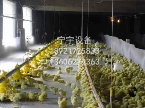 养鸡料线厂家直销
