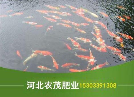 水产专用有机肥