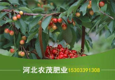 果树专用肥直销