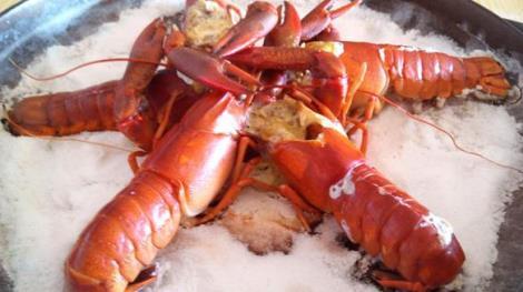 12BET官网下载红螯螯虾