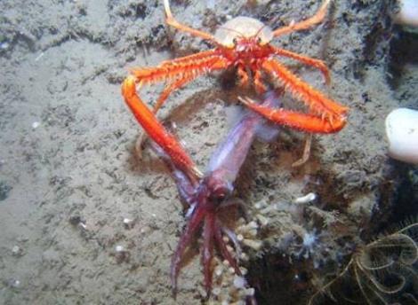12BET官网下载淡水红螯螯虾怎么样