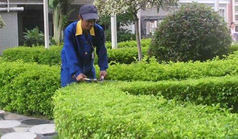 常州綠化養護