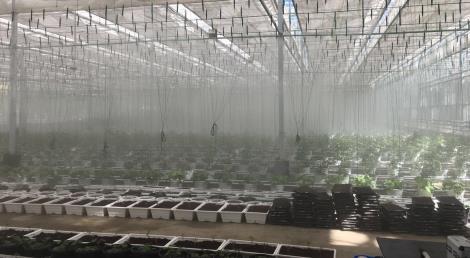 竞博官网灌溉滴灌农业生产设施