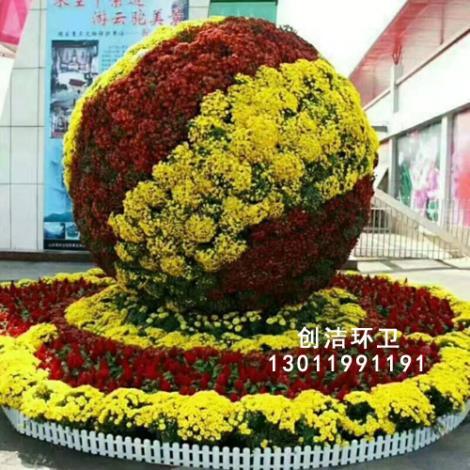 景观花柱花球生产商