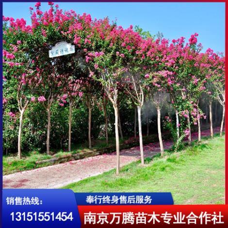 南京紫薇基地
