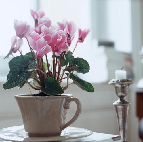 開花植物租賃