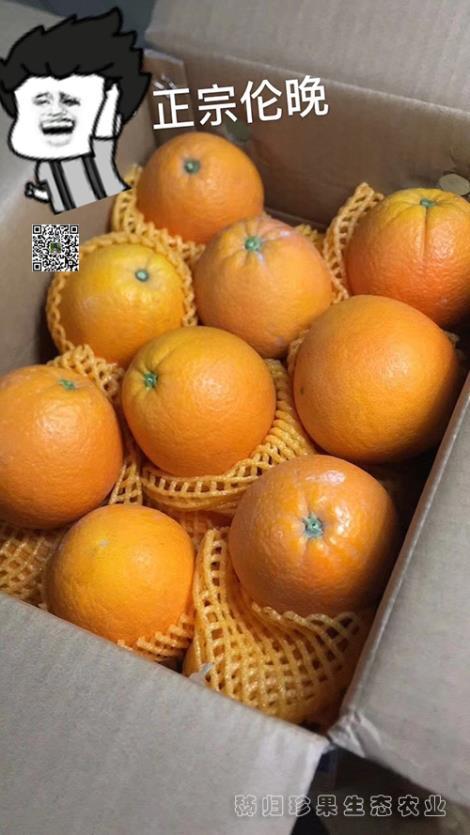 伦晚橙加盟