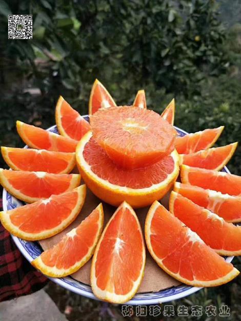 红心橙种植