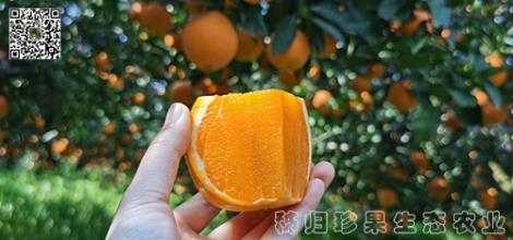 秭归长虹橙