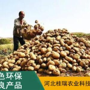 土豆供貨商